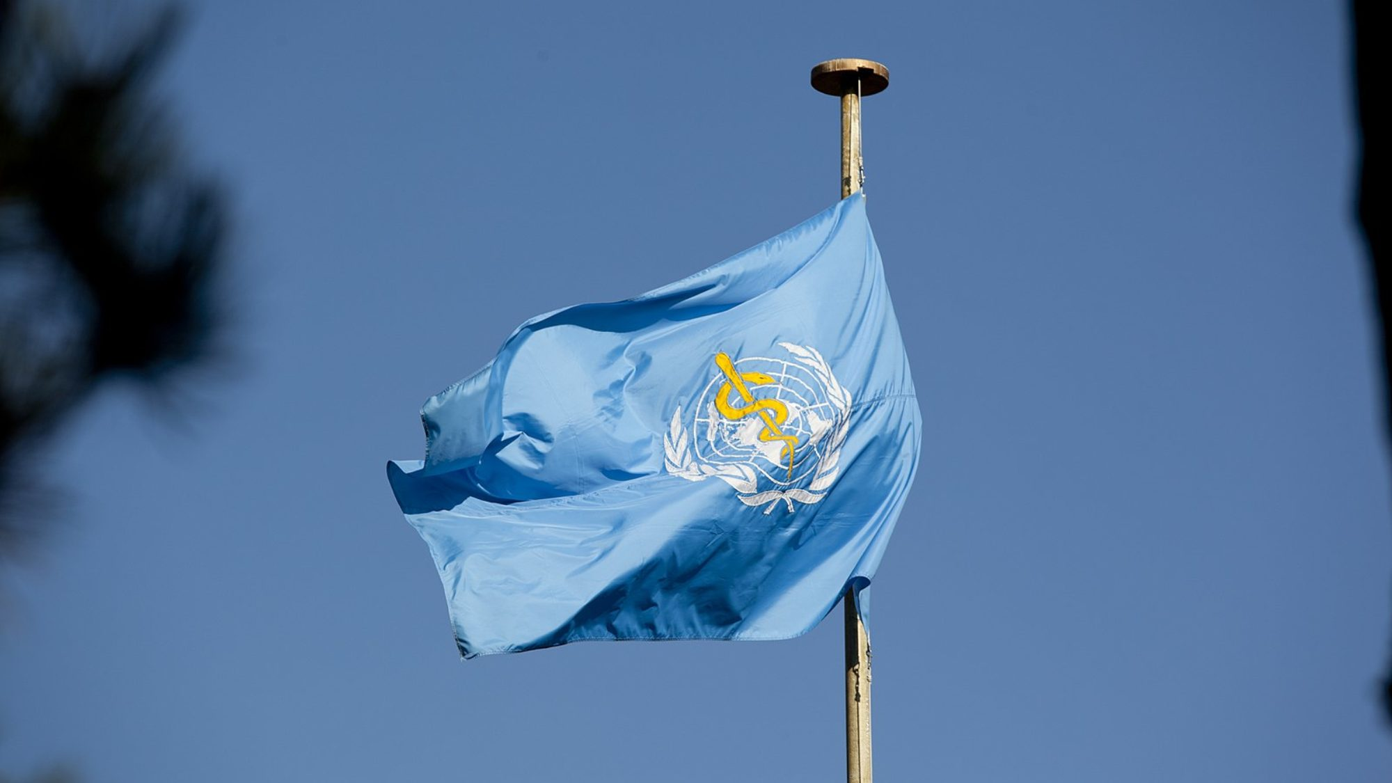 The flag of the World Health Organization (WHO) flutters on a flagpole.