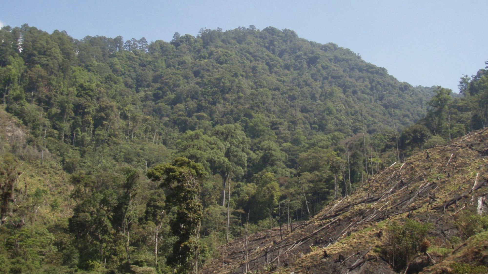 An image of a wide swathe of trees that have been cut down on the side of a mountain in Honduras.